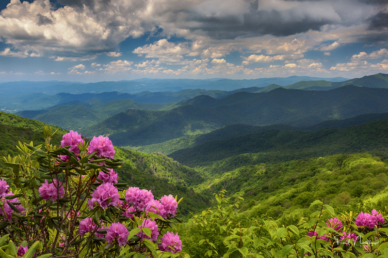 Craggy Gardens - Blue Ridge Parkway, June 2017