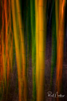 Bamboo In Motion