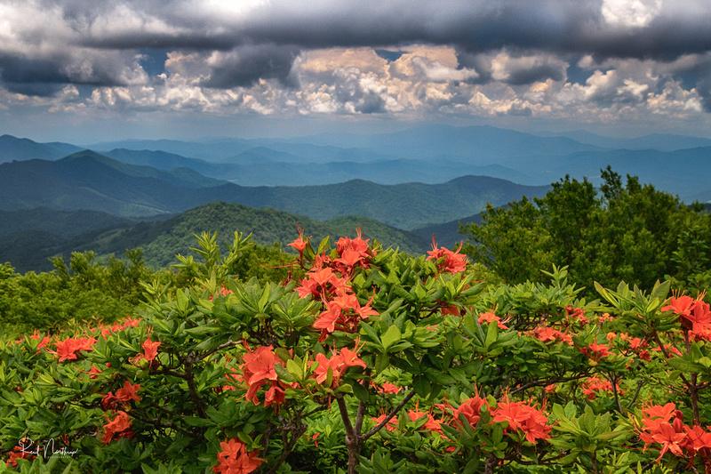 Round Bald - Roan Mountain