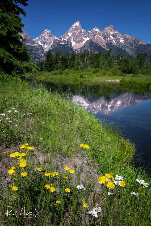 Schwabacher Landing Wildflowers - July 2021